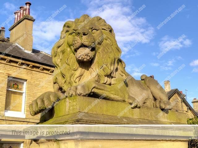 """אחד מן האריות של מילנס המכונה """"""""מלחמה"""""""" בכיכר ויקטוריה שבכפר סלטייר, שמותם של שלושת האחרים הם דריכות, נחישות ושלום."""